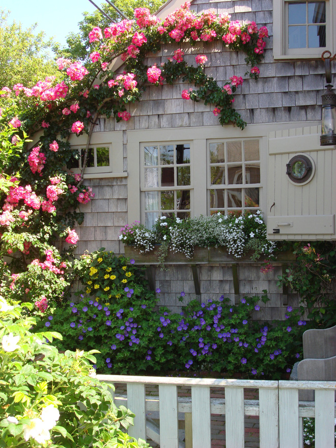 Mãn nhãn với những ngôi nhà có dàn hoa leo, ai đi qua cũng phải dừng chân ngắm nhìn - Ảnh 4.