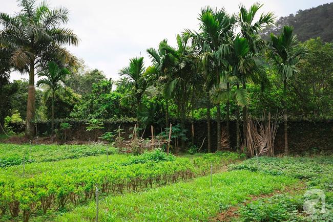Nhà vườn xanh mát bóng cây, hoa nở đẹp cách Hà Nội 45 phút chạy xe - Ảnh 5