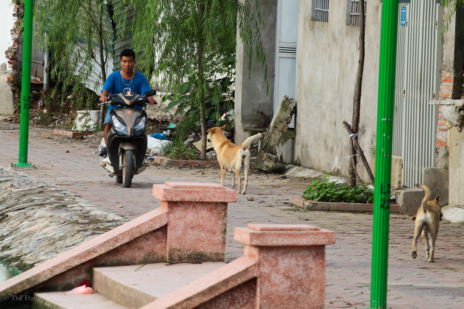 Hà Nội: Chó vẫn thả rông, không rọ mõm trước ngày luật bắt chó có hiệu lực - Ảnh 5.