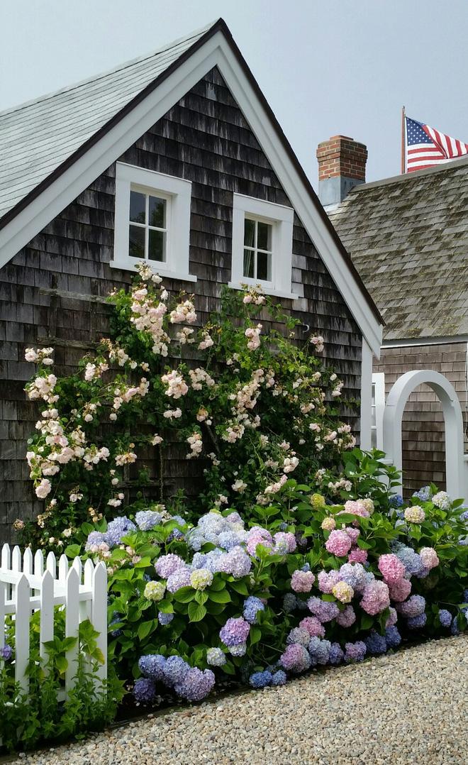 Mãn nhãn với những ngôi nhà có dàn hoa leo, ai đi qua cũng phải dừng chân ngắm nhìn - Ảnh 5.