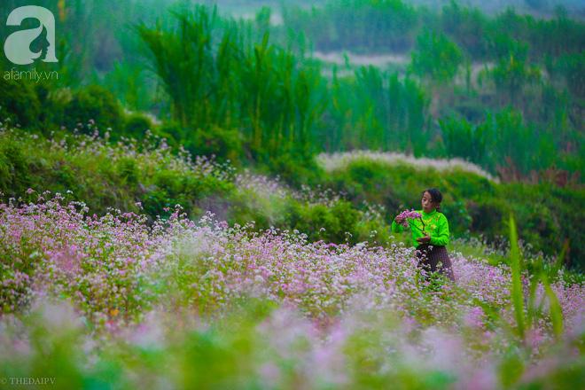 Ngắm Hà Giang đẹp mê hồn khi tam giác mạch nở rộ, nhuộm hồng miền đá - Ảnh 18.