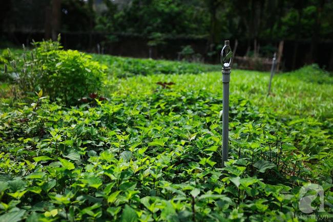 Nhà vườn xanh mát bóng cây, hoa nở đẹp cách Hà Nội 45 phút chạy xe - Ảnh 6