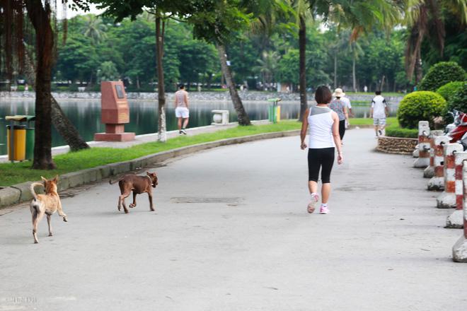 Hà Nội: Chó vẫn thả rông, không rọ mõm trước ngày luật bắt chó có hiệu lực - Ảnh 6.