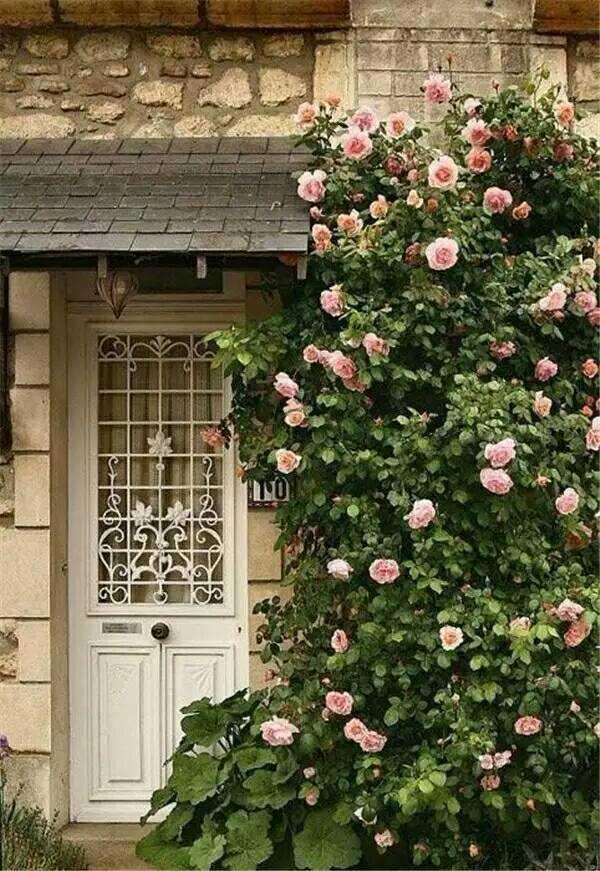 Mãn nhãn với những ngôi nhà có dàn hoa leo, ai đi qua cũng phải dừng chân ngắm nhìn - Ảnh 6.