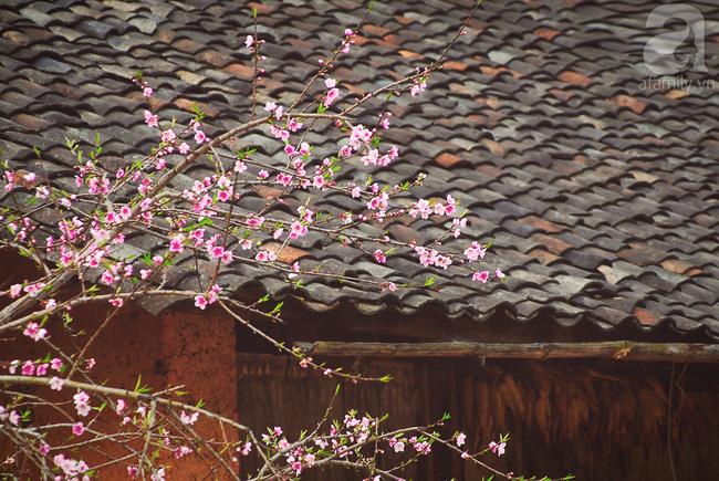 Ngẩn ngơ ngắm sắc trắng, sắc hồng của hoa mận, hoa đào ở Hà Giang - Ảnh 7.