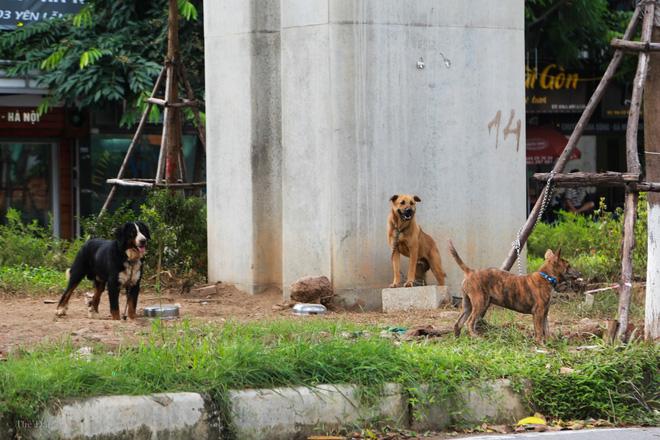 Hà Nội: Chó vẫn thả rông, không rọ mõm trước ngày luật bắt chó có hiệu lực - Ảnh 7.