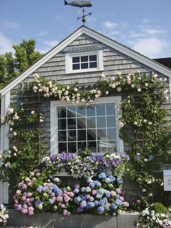Mãn nhãn với những ngôi nhà có dàn hoa leo, ai đi qua cũng phải dừng chân ngắm nhìn - Ảnh 7.