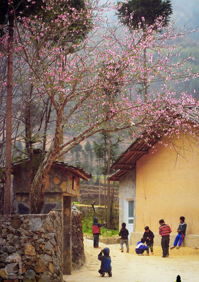Ngẩn ngơ ngắm sắc trắng, sắc hồng của hoa mận, hoa đào ở Hà Giang - Ảnh 8.