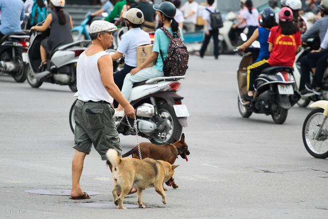 Hà Nội: Chó vẫn thả rông, không rọ mõm trước ngày luật bắt chó có hiệu lực - Ảnh 8.