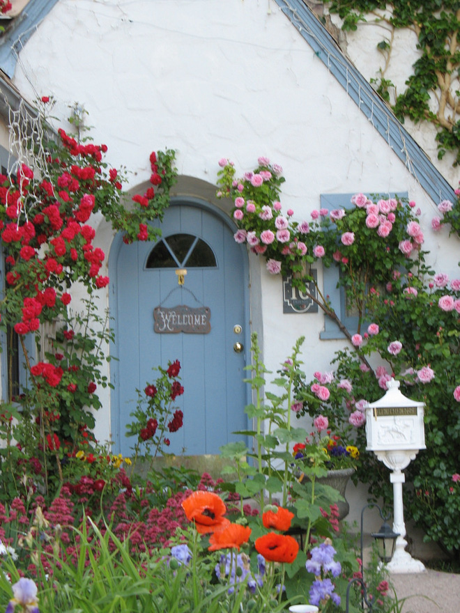 Mãn nhãn với những ngôi nhà có dàn hoa leo, ai đi qua cũng phải dừng chân ngắm nhìn - Ảnh 8.