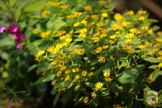 Nhà vườn xanh mát bóng cây, hoa nở đẹp cách Hà Nội 45 phút chạy xe - Ảnh 9