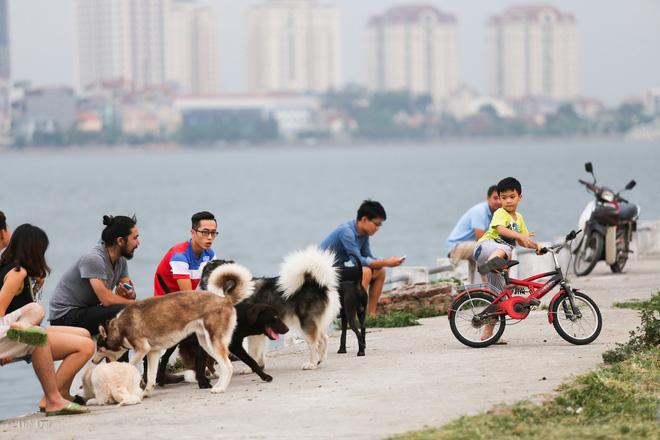 Hà Nội: Chó vẫn thả rông, không rọ mõm trước ngày luật bắt chó có hiệu lực - Ảnh 9.