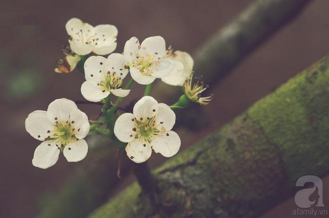 Ngẩn ngơ ngắm sắc trắng, sắc hồng của hoa mận, hoa đào ở Hà Giang - Ảnh 10.