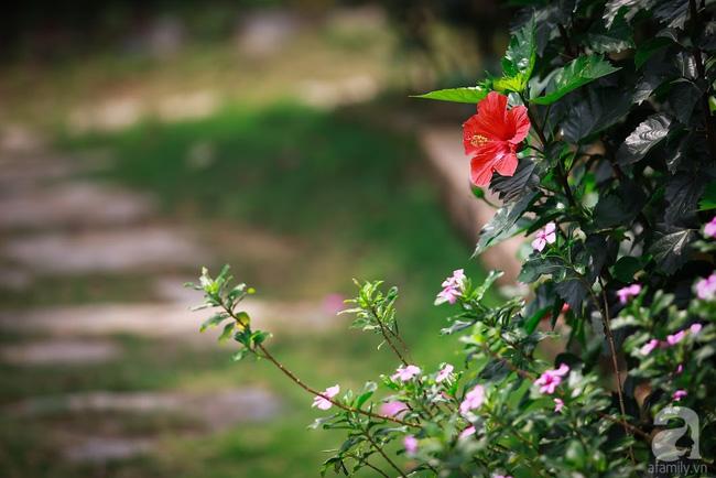 Nhà vườn xanh mát bóng cây, hoa nở đẹp cách Hà Nội 45 phút chạy xe - Ảnh 10