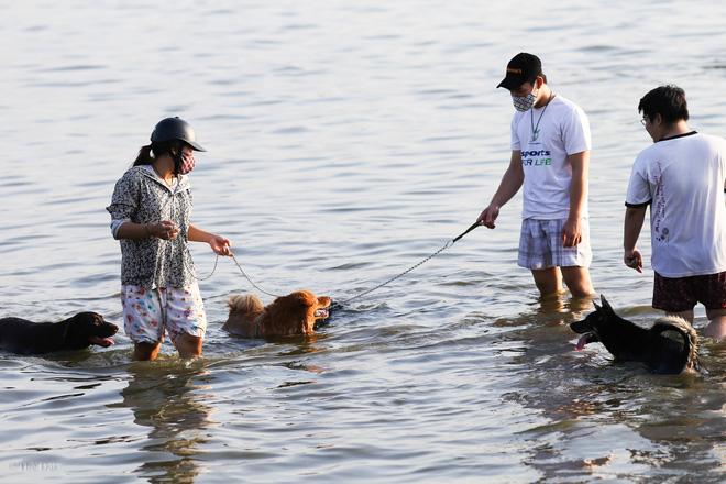 Hà Nội: Chó vẫn thả rông, không rọ mõm trước ngày luật bắt chó có hiệu lực - Ảnh 10.