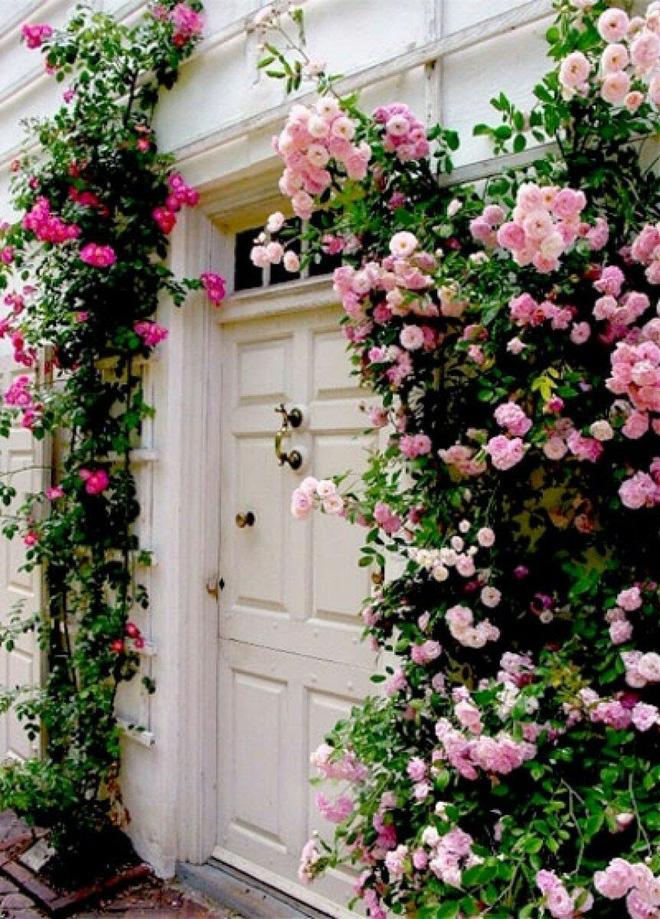 Mãn nhãn với những ngôi nhà có dàn hoa leo, ai đi qua cũng phải dừng chân ngắm nhìn - Ảnh 10.