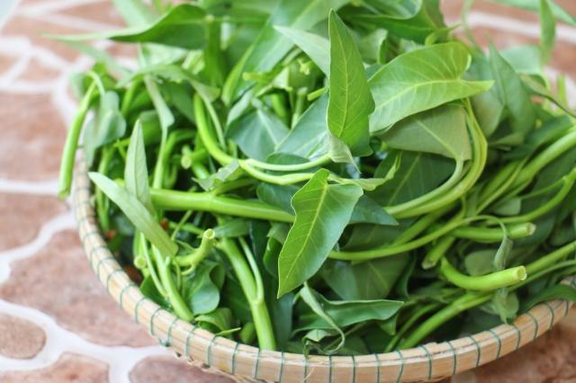 Loại rau quen thuộc mâm cơm có thể chữa được bách bệnh mà bạn gần như không hay biết - Ảnh 1.