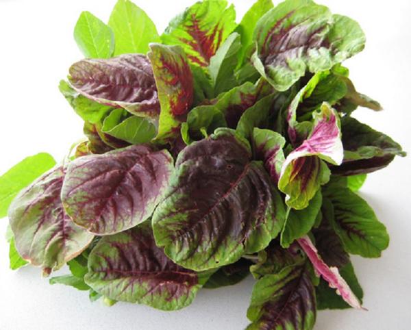 Vào mùa hè, hãy ăn nhiều rau dền vì chúng có thể giúp bạn chữa khỏi những căn bệnh đáng sợ này - Ảnh 3.