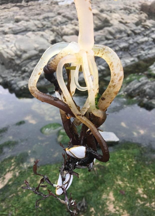 Đi dạo trên bãi biển, cô gái sửng sốt phát hiện hàng loạt sinh vật lạ bám kín tảng đá - Ảnh 6.
