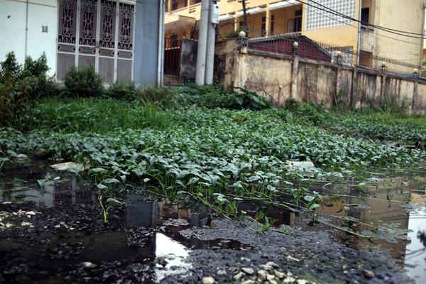 Chùm ảnh: Người dân sống cạnh ao tù, kênh rạch lo lắng khi sốt xuất huyết tăng nhanh ở Hà Nội - Ảnh 14.