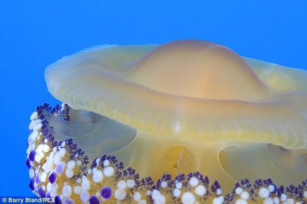 Thấy quả trứng chiên kỳ lạ trôi dưới lòng đại dương, nhiếp ảnh gia giật mình khi lại gần 1