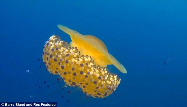 Thấy quả trứng chiên kỳ lạ trôi dưới lòng đại dương, nhiếp ảnh gia giật mình khi lại gần 5