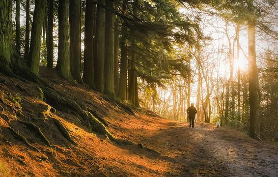 9 phương pháp đơn giản để chống lại hội chứng trầm cảm khi thời tiết ảm đạm - Ảnh 3.