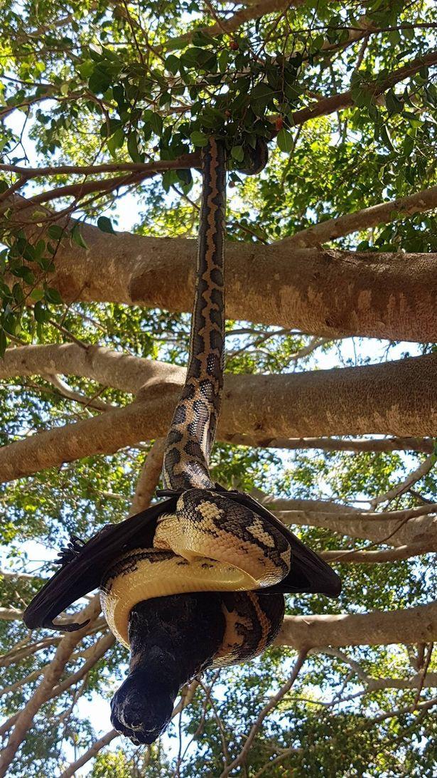 Thấy vật thể lạ bị treo trên cây, thợ săn lại gần mới giật mình nhận ra điều đáng sợ - Ảnh 5.