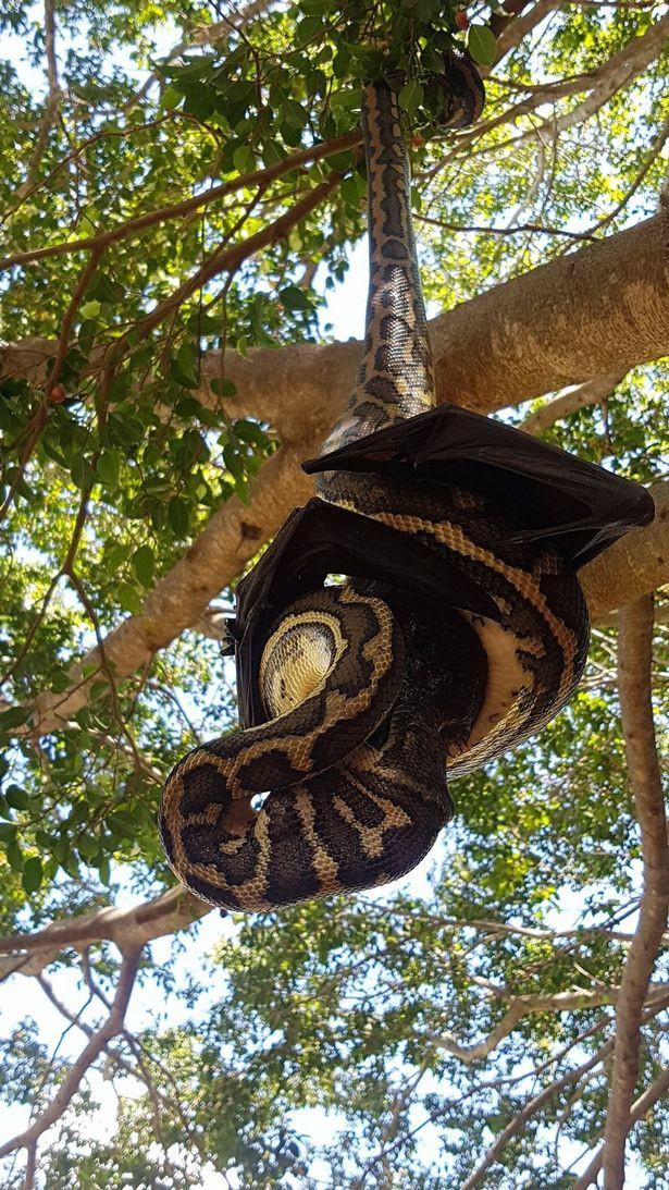 Thấy vật thể lạ bị treo trên cây, thợ săn lại gần mới giật mình nhận ra điều đáng sợ - Ảnh 4.