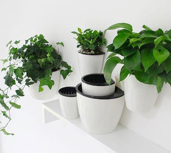 10 cách tạo ra vườn cây gia vị xinh xắn trong nhà phố bất chấp không gian chật hẹp - Ảnh 1.