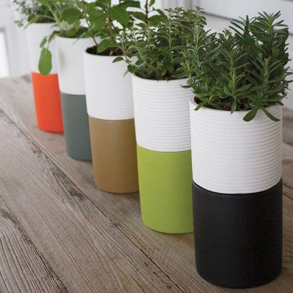 10 cách tạo ra vườn cây gia vị xinh xắn trong nhà phố bất chấp không gian chật hẹp - Ảnh 8.