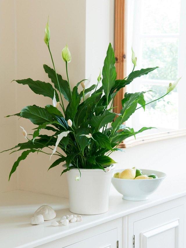 Trồng cây trong nhà bếp vừa trang trí vừa giúp bạn ăn ngon hơn, sống khỏe hơn - Ảnh 5.