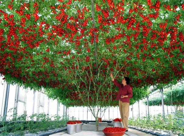 Mãn nhãn với những vườn cây cho ra trái trĩu trịt tưởng chỉ có trong mơ - Ảnh 22.