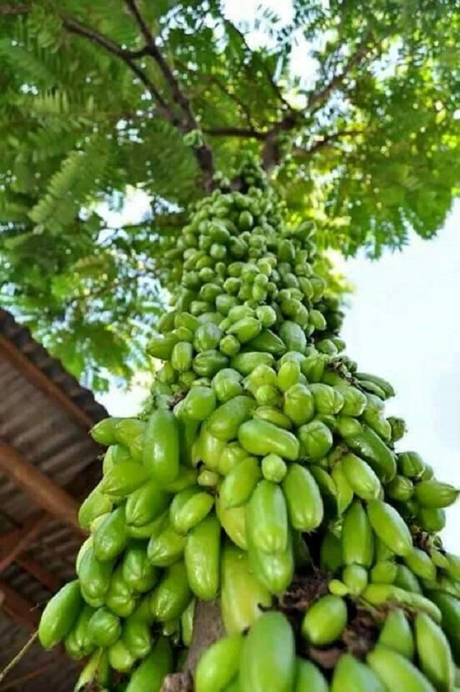 Mãn nhãn với những vườn cây cho ra trái trĩu trịt tưởng chỉ có trong mơ - Ảnh 26.