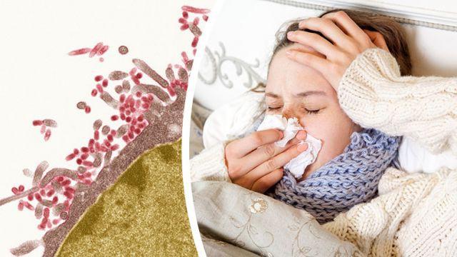 Cúm Nhật Bản - bệnh cúm khắc nghiệt của năm: Tại sao bệnh dễ lây lan và cách phòng ngừa - Ảnh 1.