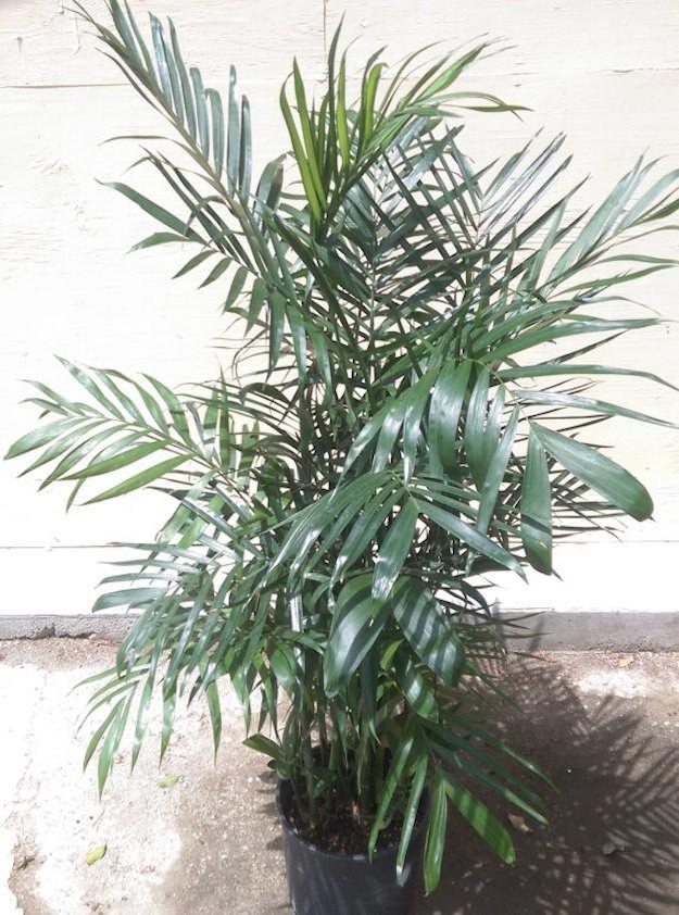 10 loại cây cảnh đẹp, dễ mua lại có tác dụng loại bỏ độc tố trong nhà - Ảnh 5.