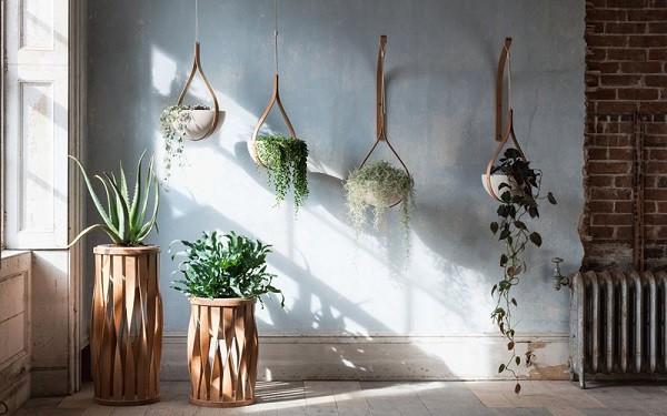 5 sai lầm cần tránh khi trồng cây trong nhà để không ảnh hưởng đến sức khỏe - Ảnh 1.