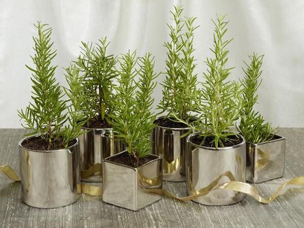 5 sai lầm cần tránh khi trồng cây trong nhà để không ảnh hưởng đến sức khỏe - Ảnh 3.