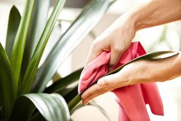 5 sai lầm cần tránh khi trồng cây trong nhà để không ảnh hưởng đến sức khỏe - Ảnh 4.