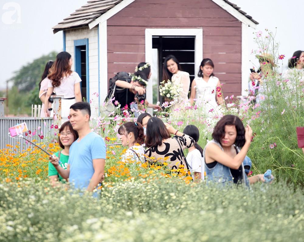 Phụ nữ, trẻ em chen nhau tạo dáng chụp ảnh kín đặc vườn cúc họa mi Nhật Tân - Ảnh 2.