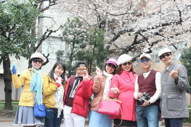 """""""Theo dấu"""" hoa anh đào nhật bản chỉ từ 23 triệu tại ngày hội Fukushima - Ảnh 2."""
