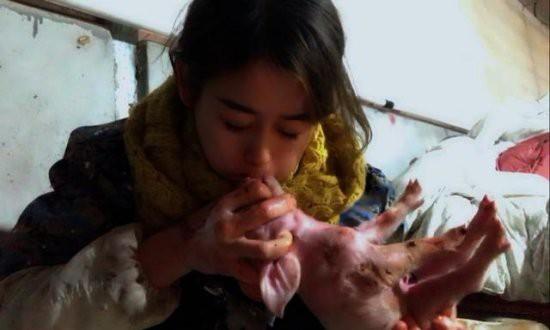 Việc nhẹ lương cao dành cho phái đẹp: Cô gái trẻ kiếm 3 tỉ đồng mỗi năm nhờ việc hôn lợn - Ảnh 4.