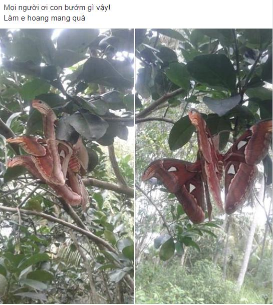 Bức ảnh sinh vật lạ bươm bướm lai rắn nâu đậu trên cây bưởi khiến dân mạng hoang mang tranh cãi - Ảnh 1.