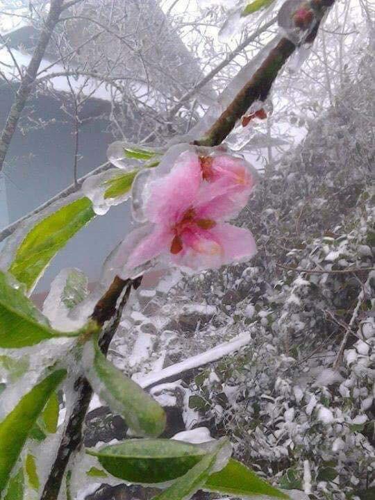Sa Pa tuyết phủ trắng xóa như ngôi làng cổ tích, du khách ngỡ ngàng vì cảnh tượng quá đẹp - Ảnh 17.
