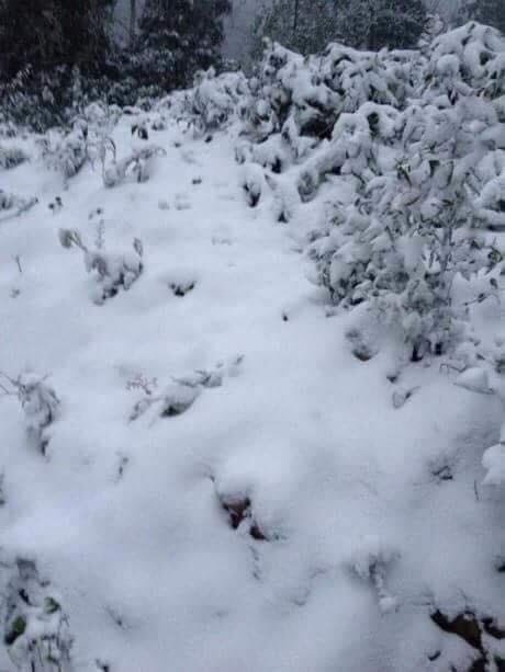 Sa Pa tuyết phủ trắng xóa như ngôi làng cổ tích, du khách ngỡ ngàng vì cảnh tượng quá đẹp - Ảnh 16.