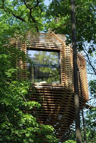Độc đáo ngôi nhà gỗ trên cây sồi trăm tuổi - Ảnh 6.