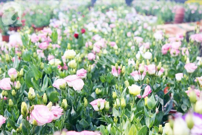 Ngày 28 Tết, tới làng hoa Thới An để hiểu một nghịch lý: Vườn mà đìu hiu thì người vui, ngược lại thì buồn - Ảnh 11.