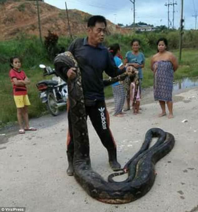 Phát hiện trăn khổng lồ 6m đang ân ái, dân địa phương bắt về làm thịt, xào lên chia cho cả làng - Ảnh 2.