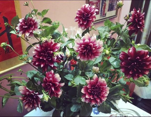 6 loại hoa cổ truyền chưa bao giờ hết hot mỗi độ Tết đến, xuân về - Ảnh 12.