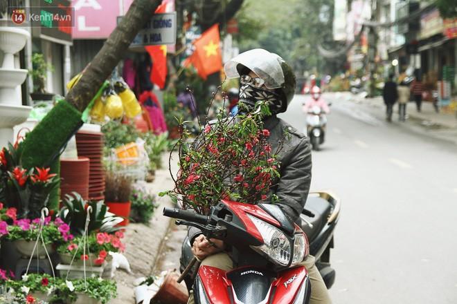 Đào tiến vua đại náo thị trường hoa Tết, giá bán lên tới hàng chục, hàng trăm triệu đồng - Ảnh 2.